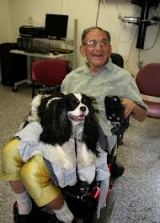 Procedures for Placing Therapy Dogs in Nursing Homes